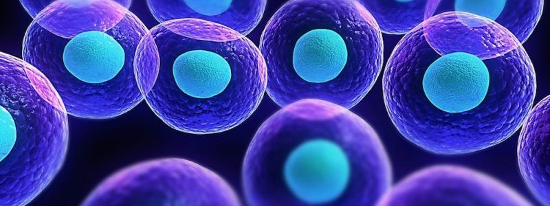 Terni, primo trapianto con cellule staminali