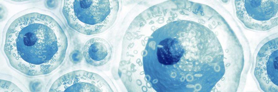 40 i trapianti di cellule staminali andati a buon fine con Vita 34