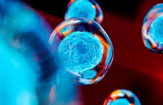 Nuovo successo per Vita 34: sono 41 i trapianti di cellule staminali andati a buon fine